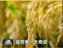 """【中国梦实践者】冲破冷言冷语 袁隆平和""""超级稻""""的升级打怪之路"""