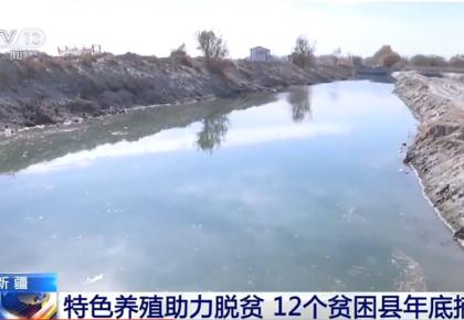新疆特色养殖助力脱贫 12个贫困县年底摘帽