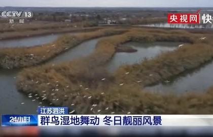 【生态文明@湿地】江苏泗洪:群鸟湿地舞动 冬日靓丽风景