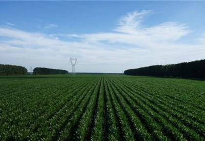 """糧食增產""""全國第一""""!新華社聚焦吉林加快推進現代農業發展  ?"""