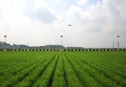 吉林省农业农村厅发布2020年全省农业主导品种和主推技术