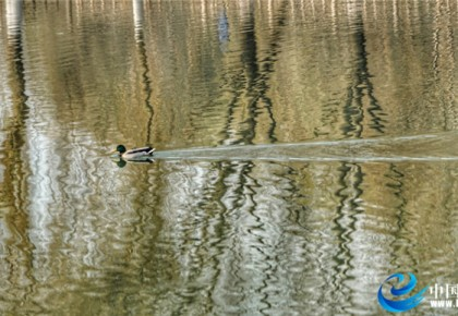 【生态文明@湿地】黄河之滨 精致兰州