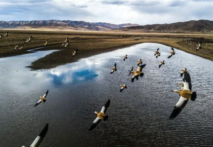"""【生态文明@湿地】在川西北生态示范区,有一片""""候鸟天堂"""""""