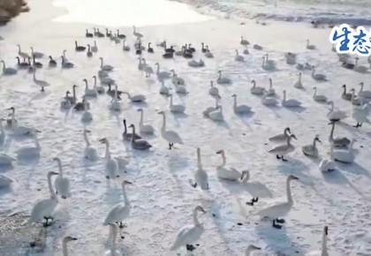 【生态文明@湿地】新疆 江西:给越冬候鸟一个安全的家
