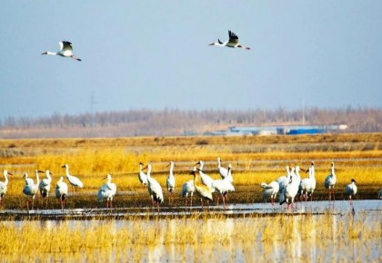 【生态文明@湿地】与湿地相伴,绿水青山给了他们金山银山