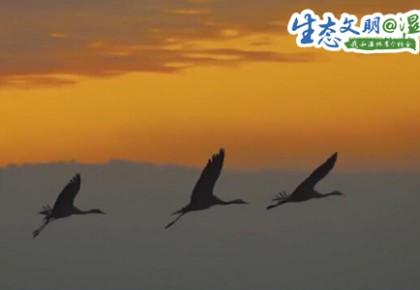 【生态文明@湿地】万鸟齐聚,都昌成了候鸟的天堂