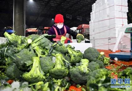 蔬菜產地供應充足 菜價在合理區間——來自蔬菜生產大省山東的一線調查報告