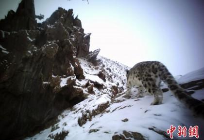 """国家公园示范省青海""""双十条""""顶格管理保护野生动植物"""