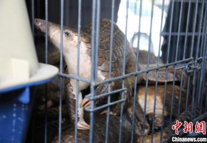 浙江公安破获特大非法收购出售珍贵濒危野生动物案