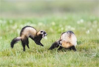 为青藏高原野生动物保护提供示范
