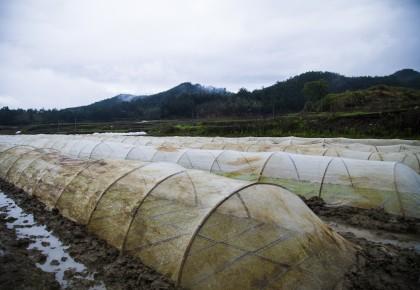 福建将乐:春耕时节 水稻种植忙