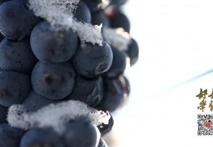 """好好学习丨问:喜欢吃吗?答:喜欢!""""雪地里的葡萄你敢吃吗?"""""""