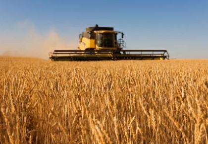我国粮食增产保供能力将稳步提升