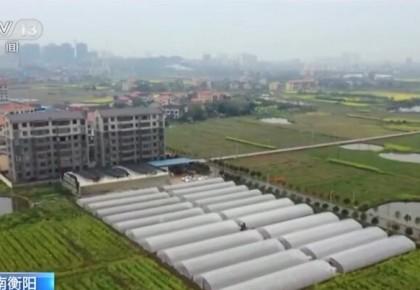 湖南:春耕生产紧 集中育秧忙