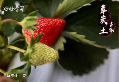 """好好學習丨無中生有的""""混血""""草莓"""