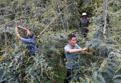 小康路上一個都不能少——環江毛南族脫貧攻堅的綠色力量