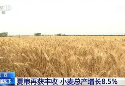 單產創近年新高!陜西:夏糧再獲豐收 小麥總產增長8.5%