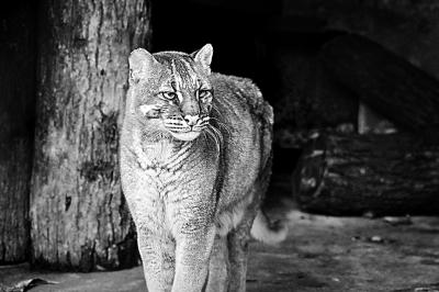 国家重点保护野生动物植物名录 20年未变亟须更新
