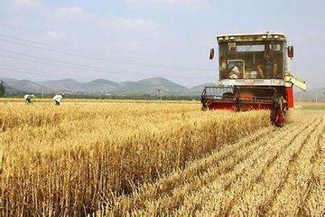 麦收过半! 全国收获冬小麦1.94亿亩