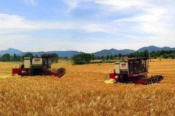 夏粮丰收成定局 全国九成小麦已收获