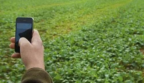 """手机成为""""新农具"""",能否解决农民卖难?"""