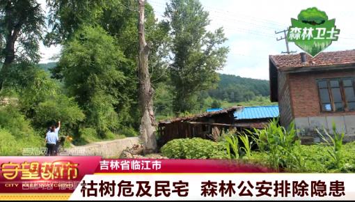 【视频】临江:枯树危及民宅 森林公安排除隐患