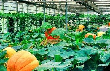 全国蔬菜质量标准中心在山东寿光成立,为蔬菜质量安全保驾护航