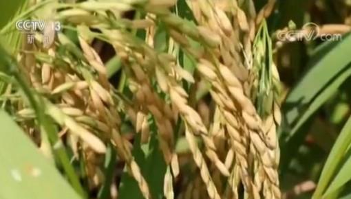 我国农业农村经济稳中向优 一二三产业融合发展农民受益