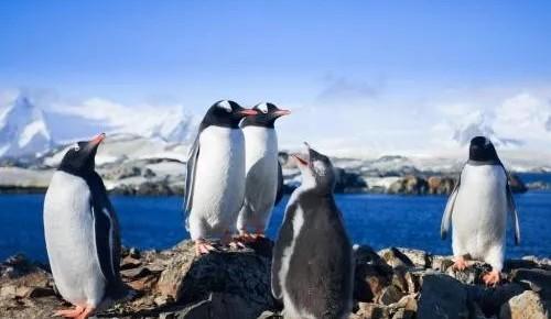 南极科考:不走别人走过的路