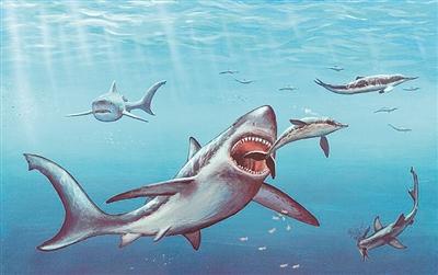"""谁害死了""""史前怪兽""""巨齿鲨?"""