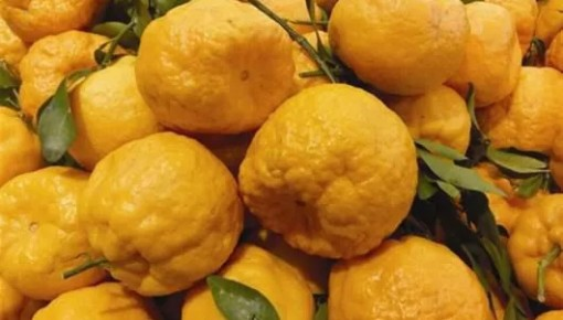 长春中东大市场、砂之船奥特莱斯有食品被检测不合格,快看看你买过吗?