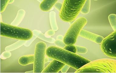 益生菌到底益不益?因人而异!
