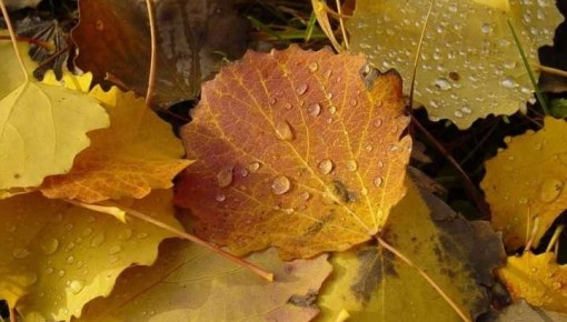 一场秋雨一场寒,秋冬不感冒的小秘诀在这里!