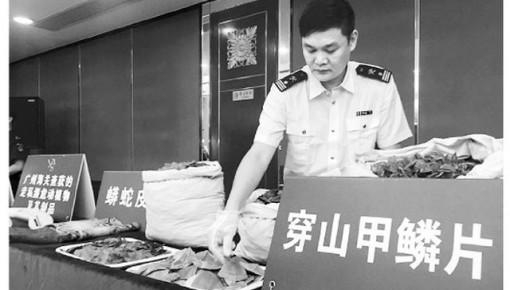 广州海关起底走私内幕 1.2万至1.8万只穿山甲遭剥鳞猎杀