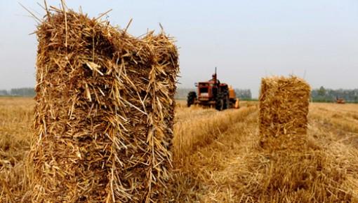 2019-2025年,我省将对秸秆覆盖还田保护性耕作作业每亩补贴30元