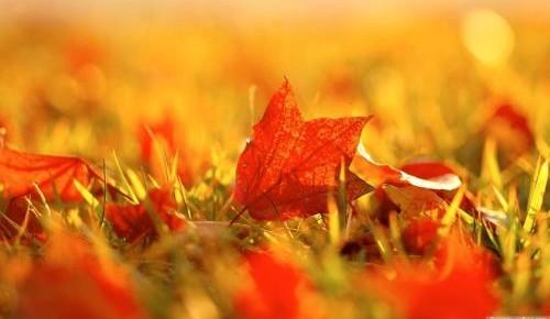 秋燥、秋乏、秋愁、秋膘!四秋症,这样来应对!