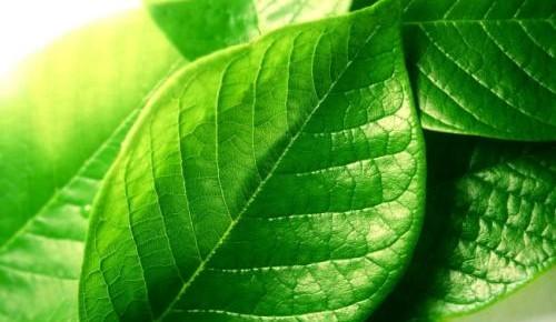 又一奇葩作业上线!观察树叶 测算一枚树叶的周长……