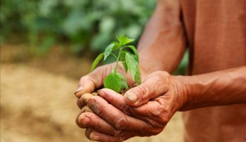 中央地方多策齐发 瞄准8亿农民 一揽子增收新政将实施