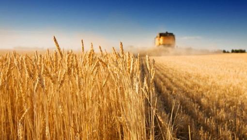 近日气温下降有小雨 省农业农村厅要求各地加快秋收进度