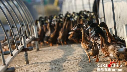 【壮阔东方潮 奋进新进代•行进】红手印开启的中国农村土地变革进一步激发乡村发展活力