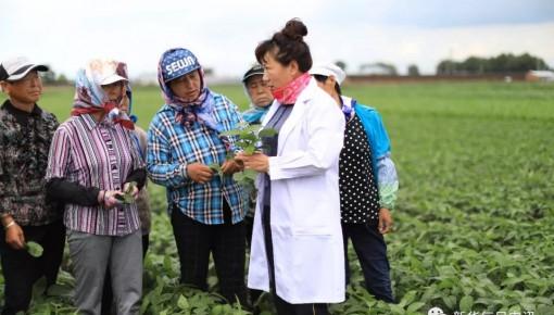 """为中国大豆""""争气"""",""""女袁隆平""""培育的大豆单产达国际先进水平"""