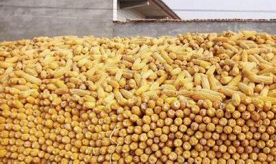 吉林省农业农村厅对2018年新产粮食作物开展质量安全专项监测,确保粮食作物质量安全