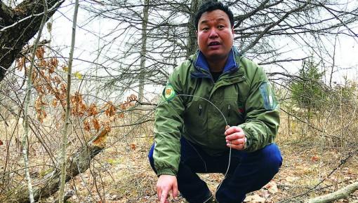 保护野生动物!东北虎豹公园大规模清山清套