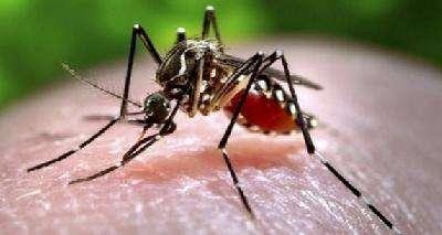 """科学家找到蚊子的""""咬人基因"""" 可创造仅有雄性蚊子的种群"""