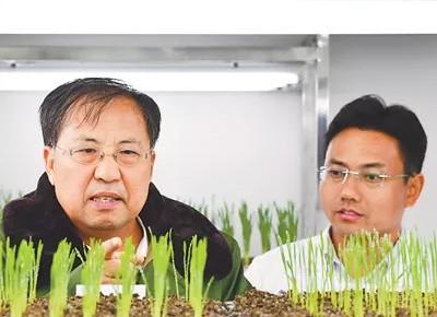 他偶然发现的几株种子,最终让中国在杂交小麦育种上夺得话语权!