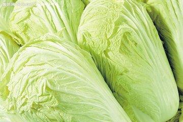 """创5年新低!白菜真的卖出""""白菜价"""" 有菜农粉碎蔬菜当绿肥"""