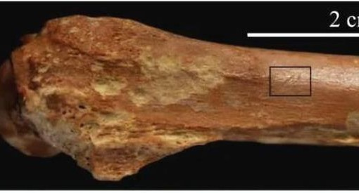 新发现!距今240万年前北非出现古人类,提前约60万年