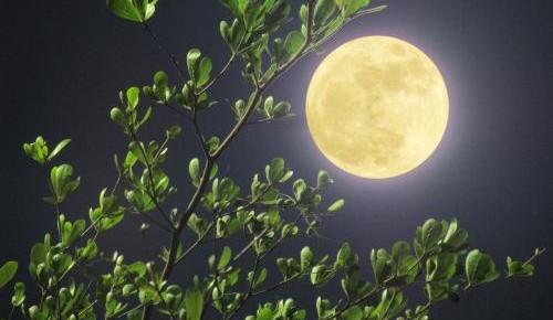 从月球上能看到长城?关于月亮的谣言你信过几个