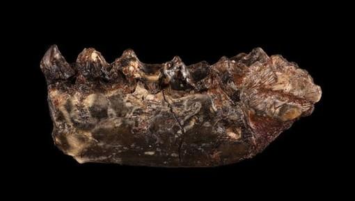 北美发现距今约5600万年的最古老灵长目祖先
