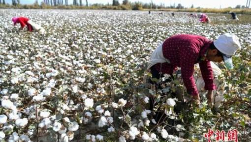 2018年中国棉花总产量609.6万吨,比上年增加44.4万吨